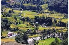 L'été à la vallée de Ta Van-Lao Chai impressionne les touristes