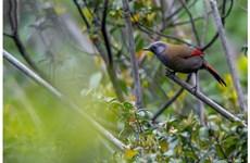 Contempler les oiseaux rares dans le parc national de Hoàng Liên