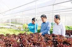 L'île de Phu Quoc développe une agriculture écologique liée au tourisme