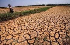 Des efforts considérables sont nécessaires pour aider le delta du Mékong à surmonter la sécheresse