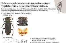 Publication de nombreuses nouvelles espèces  végétales et insectes découverts au Vietnam