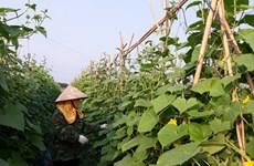 Vinh Phuc : l'agriculture contribue 0,13 point de pourcentage à la croissance provinciale