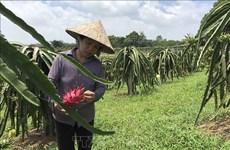 Toutes les communes de Vinh Phuc répondent aux normes de la Nouvelle ruralité