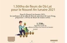 1.500ha de fleurs de Dà Lat   pour le Nouvel An lunaire 2021