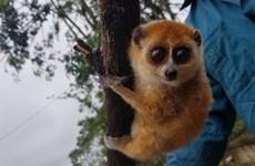 Quang Nam: élargir l'habitat et diversifier les sources de nourriture pour les animaux rares