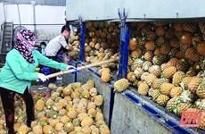 Thanh Hoa incite les entreprises à investir dans la transformation des fruits et légumes