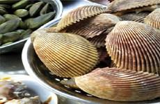 Augmentation des exportations de mollusques bivalves en UE