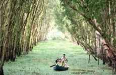 La forêt de Tra Su, écosystème à part entière du Delta du Mékong