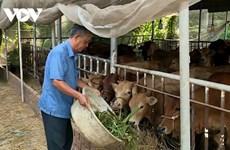 Duong Van Tao, un entrepreneur accompli