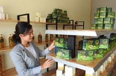 Hô Thi Kim Oanh et le thé au « ginseng du pauvre » de Ngoc Linh