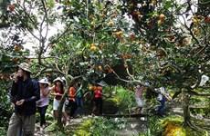L'écotourisme, une filière d'avenir pour Bà Ria-Vung Tàu ?