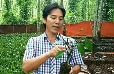 Bâu Mây, la marque vietnamienne de poivre la plus chère