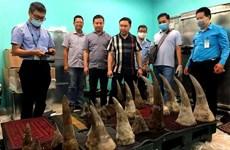 Découverte d'objets semblables à des cornes de rhinocéros à Tan Son Nhat