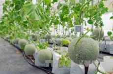 Le Vietnam cherche à renforcer l'application de la biotechnologie à l'agriculture