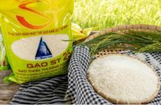 Le groupe PAN protège les marques de riz ST24 et ST25 à l'étranger