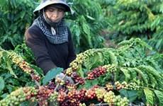Le Vietnam voit ses exportations de poivre vers la France augmenter en sept mois