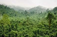 Près de 270.000 hectares de forêts au Vietnam ont obtenu des certificats internationaux