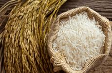 La Thaïlande risque de perdre sa place de deuxième exportateur mondial de riz en 2020