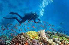 Forbes: L'île de la Baleine (Centre) figure parmi les 10 meilleures destinations pour la plongée