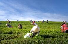 L'Indonésie alloue 3,4 milliards de dollars à l'agriculture à haute technologie