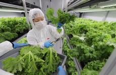 Singapour s'efforce de maîtriser les approvisionnements alimentaires nationaux