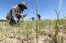 La Thaïlande fait face à une grave sécheresse et à une hausse du chômage au milieu du COVID-19