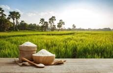 Les exportations de riz du Cambodge devraient atteindre 800.000 tonnes en 2020