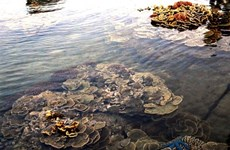 Gành Yên : l'aquarium terrestre