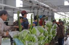 Des projets agricoles au Cambodge soutiennent le changement d'emploi des Vietnamiens