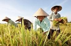 Opportunités de renforcer les exportations nationales de riz vers l'Australie