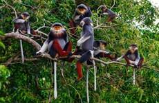 Le Vietnam coopère avec les pays de l'ASEAN pour inverser la perte de la biodiversité