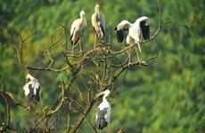 Parc ornithologique de Thung Nham, un site pour les amateurs d'oiseaux
