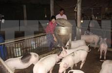 Le vaccin contre la peste porcine africaine sera disponible au troisième trimestre 2021