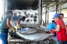 Les exportations de thon bondissent de 4 à 5 fois