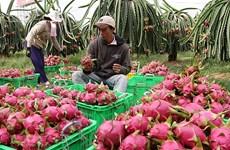 Les exportations nationales de fruits et légumes ont doublé en janvier
