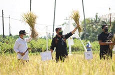 L'Indonésie appelle ses régions à promouvoir l'agrotourisme