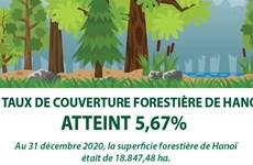 Le taux de couverture forestière de Hanoï atteint 5,67%