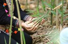 Les pousses de bambou contribuent au refus de la pauvreté