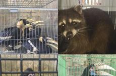 De grands efforts dans la lutte contre la criminalité liée aux espèces sauvages