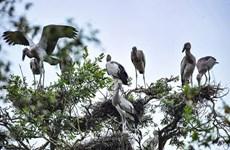 Des ONG appellent à la protection des oiseaux sauvages