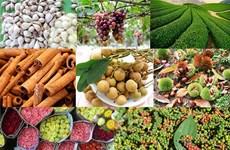 Des produits agricoles vietnamiens favorisés sur le marché exigeant de l'UE