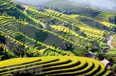 Un aperçu de Ha Giang à la saison des rizières dorées