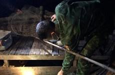 Quang Binh: une tortue olivâtre de 120 kg est relâchée à la mer