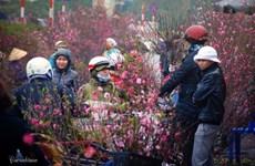 CNN : Le marché aux fleurs de Quang Ba, une destination à ne pas manquer à l'occasion du Têt
