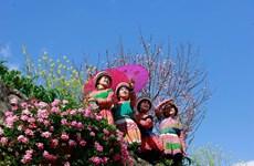 Les fleurs de pêcher à Sapa captivent les visiteurs