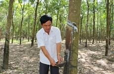 VRG exploite plus de 25.400 tonnes de latex à Kampong Thom (Cambodge) en 2018