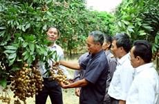 Hanoï accélère l'édification de marques protégées pour ses produits agricoles renommés