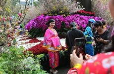 Le 5e Festival des fleurs de cerisier de Hanoï se tiendra en mars prochain