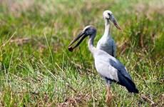 Plusieurs espèces d'oiseaux sauvages affluent à Bac Lieu