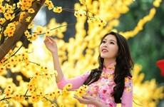 Ho Chi Minh-Ville organisera pour la première fois un Festival du Têt